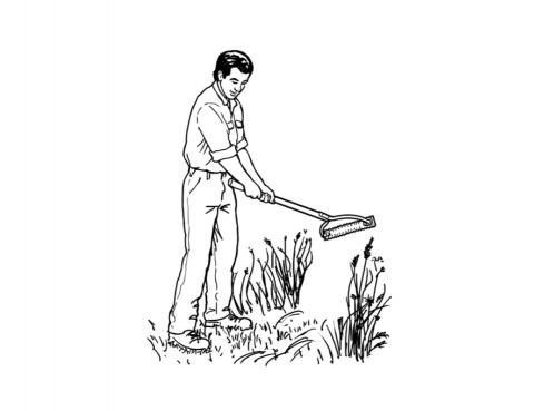 Knock down or mow existing vegetation.