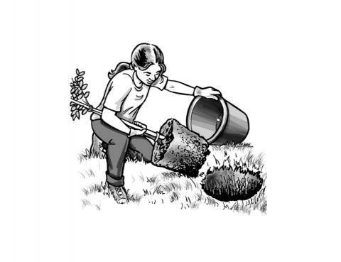 Remove plants from buckets, place into pre-dug holes.