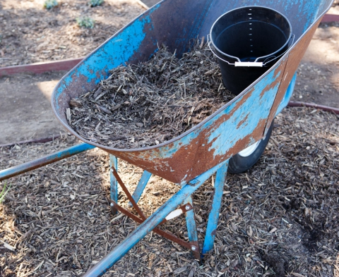 Mulch retains soil moisture and suppresses weeds